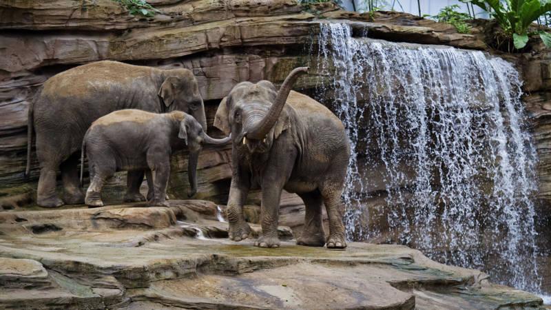 Wildlands Adventure Zoo Arrangement -