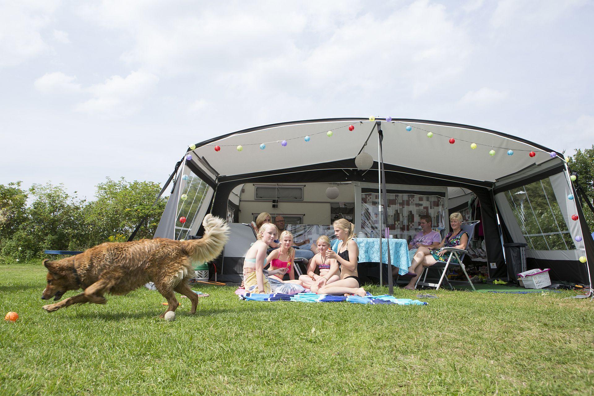 Kamperen met hond op een 5 sterren camping! - Kamperen met uw hond